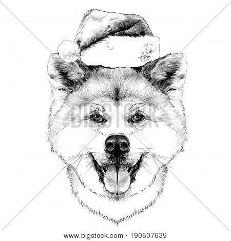 muzzle dog breed Akita inu with his tongue hanging out in Santa hat full face looking forward symmetrically sketch vector graphics black and white drawing