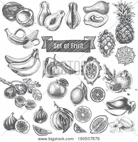 Vector illustration sketch - eco shop. Set of Fruit. card hand drawn