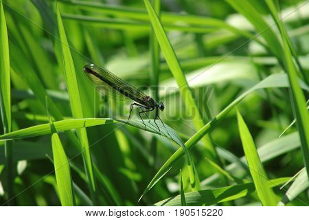 The green dragonfly sits on a sheet