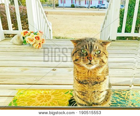A mackerel Tabby cat is waiting at a glass front door staring inside.