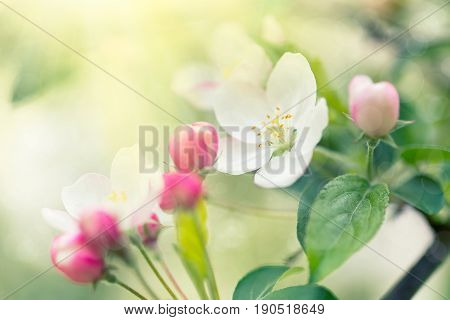 Beautiful spring blooming tree abstract spring time background nature concept