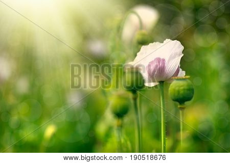 Vintage Flower With Like Abstract Background Concept