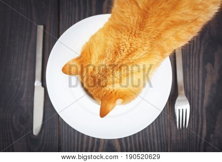 Hungry cat is looking for food in a plate on a wooden background.