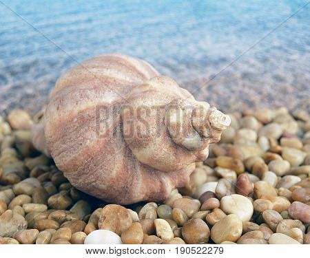Sea cockleshells are formed of limestone. The cockleshell is located on the beach