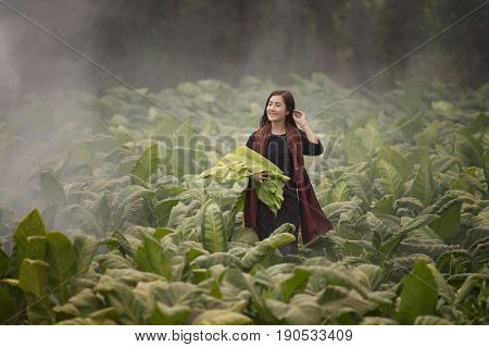 Beautiful Thailand woman working in tobacco farm.