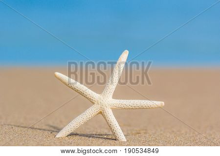 Starfish on golden sand beach shore in the sea ocean water with selective focus. Concept for holiday vacation travel summer time beach getaway relaxing time.