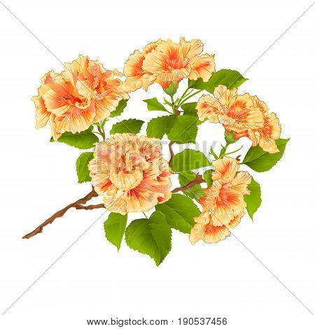 Branch yelow hibiscus tropical flowers on a white background vintage vector botanical illustration hand draw