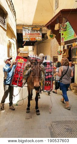 Fes Morocco - May 07 2017: Young Moroccan man is unloading boxes filled with coke bottles from the back of a mule in the Medina of Fes Morocco North Africa.