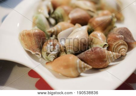 Boiled fresh Laevistrombus canarium or sea snail Thai style food