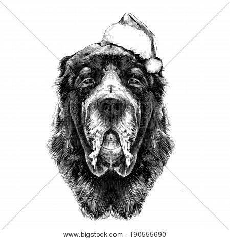 the head of the dog breed Alabai or the Central Asian shepherd dog in Santa hat full face symmetry sketch vector graphics black and white drawing