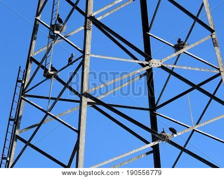 Cormorants on the transmission line tower in Toronto Canada June 7 2017