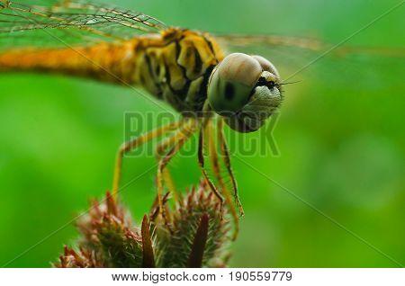 dragonfly close up eye.dragonfly close up eye.