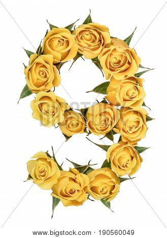 Arabic Numeral 9, Nine, From Yellow Flowers Of Rose, Isolated On White Background