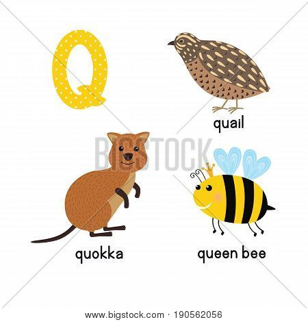 ABC letter Q funny kid icons set: quokka, quail, queen bee. Alphabet children education collection.