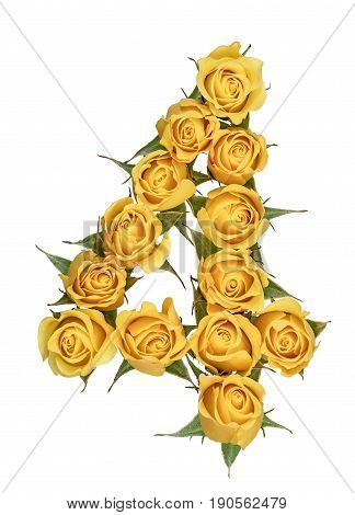 Arabic Numeral 4, Four, From Yellow Flowers Of Rose, Isolated On White Background