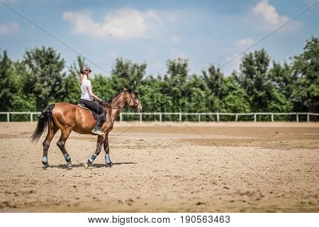 Equestrian on horseback. Animals and sport concepts.