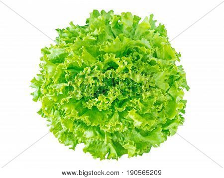 Green batavia lettuce salad head top view isolated on white