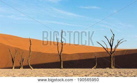 Deadvlei in the Namib Naukluft Park Sossusvlei Namibia