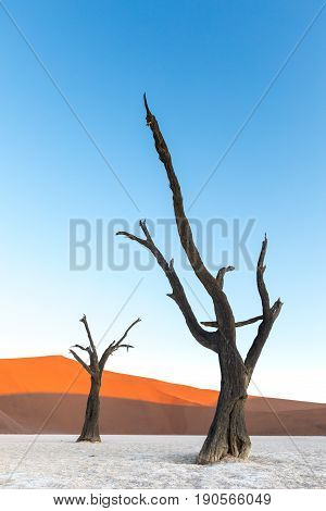 Dead trees at sunset in Deadvlei part of the Namib Naukluft Park in Namibia