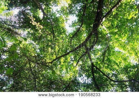 Luxuriant green bush environment and tree canopy Niue
