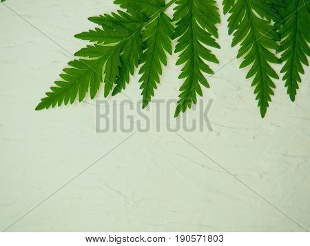 Green Leafs On White Background, Space For Text, Concept For Summer, Spring