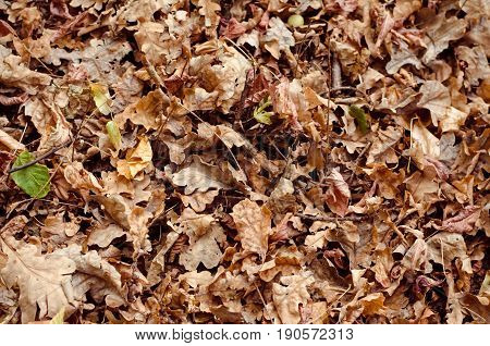 Background of rotten yellow autumn fallen leaves