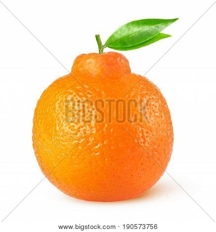 Isolated Tangelo Citrus Fruit