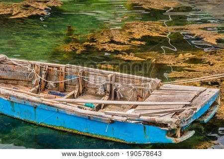 Blue wooden row boat floating on a sea of greenish colored water with brown plants floating on the surface.