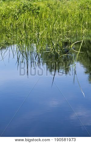 Blue sky and a few clouds reflected in the pond with tall grass at water's edge.