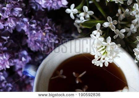 Lilac, Flowers Lilac And White Color. Beautiful Composition.