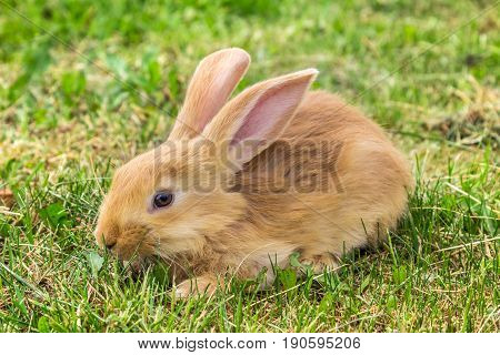 scared look of young rabbit sitting on grass