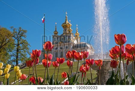 The building of the church building. Flowers are in the foreground. In the back there is a church, a flagstaff and a fountain. Focus on tulip flowers. Petergof, Russia.