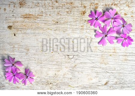 Two Opposite Corner Frames From Pink Shaggy Phlox With Copy Space For Your Text