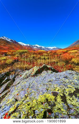 Autumn landscape with orange and red tree. Bright valley in the middle of the mountain peaks covered with snow.