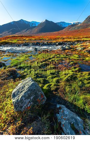 Mountain landscape in the morning. Dawn of the sun. The mountain river flows in a canyon between brightly green moss and red bushes.