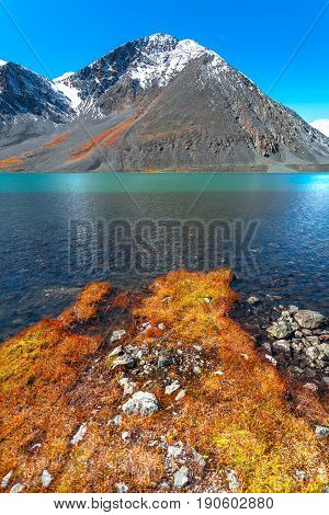 Mountain lake with turquoise water. In the foreground the orange grass. In the background the mountain peak. Altai Russia