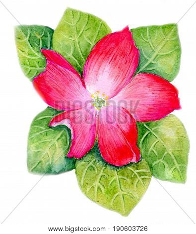 Red flower surrounded by leaves, hand-painted watercolor illustration and paper texture