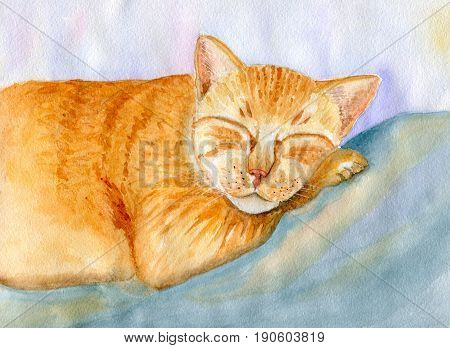 Sleeping red cat, hand-painted watercolor illustration and paper texture