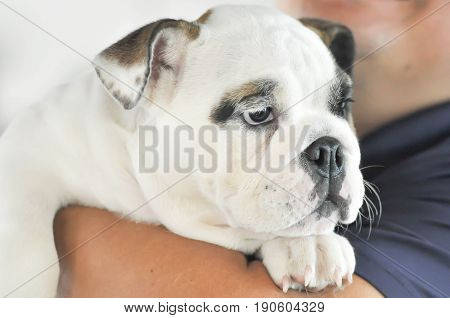 A man's carrying a dog or bulldog