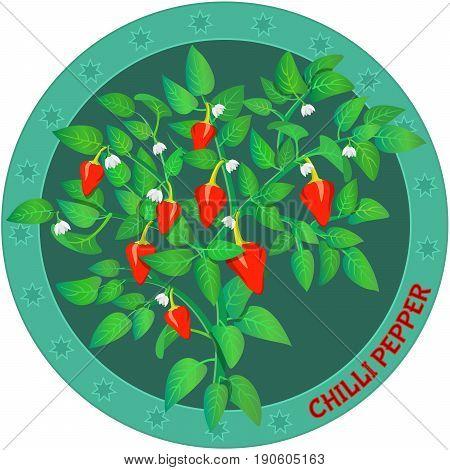 Chilli pepper plant. Organic vegetable product. Banner, label design.  Vector illustration.