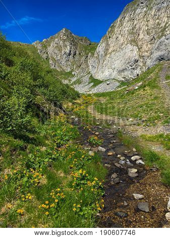 Little creek in the Carnic alps, Friuli Venezia Giulia, Italy