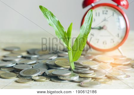 Money growing and plant growth concept on wood table
