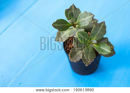 A small plant in a pot surviving on wood .