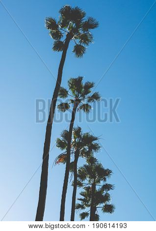 Palm trees against blue sky in Venice Beach, California
