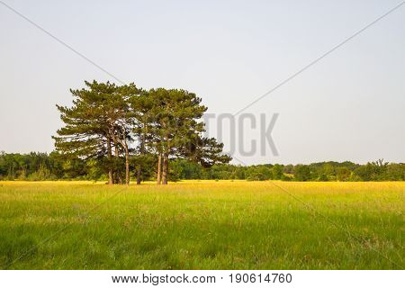 A Group Of Trees Stand Alone In The Midst Of A Trembling Field