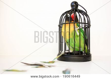 Fear Of A Closed Space Concept. A Bird