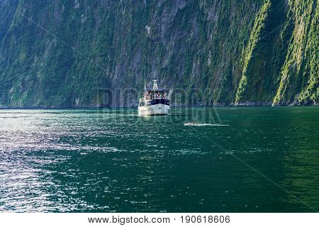 MILFORD SOUND NEW ZEALAND - APRIL 23 2017 : Tour cruise stops for watching Bottlenose dolphin in Milford Sound Fiordland National Park South Island of New Zealand