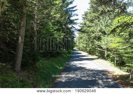 Road Of Forest In Aran Valley, Spain