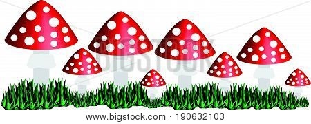 Toadstool isolated on white background. Vector illustration.