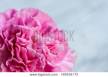 Closed pink artificial flower on white background